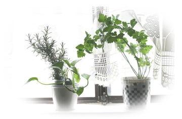 Kitchen_herb