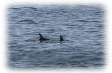 Dolphin_cruise_3