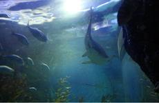 Aquarium_3