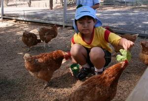 Hand_feeding_farm_animals_1